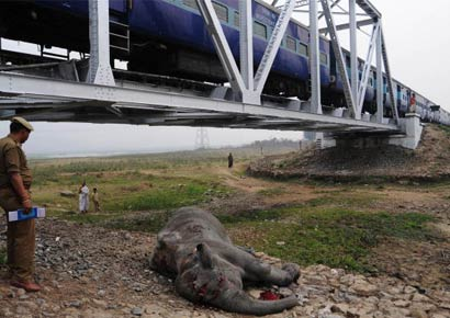 A police officer inspects the body of an elephant near a railway track after it was knocked down by a train in Deepor Beel Wildlife Sanctuary on the outskirts of Assam capital Guwahati on February 28, 2010.