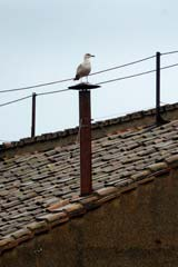The bird perched on the chimney