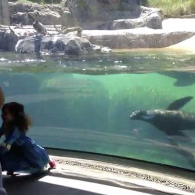 Video of little girl playing chase with sea lion goes viral