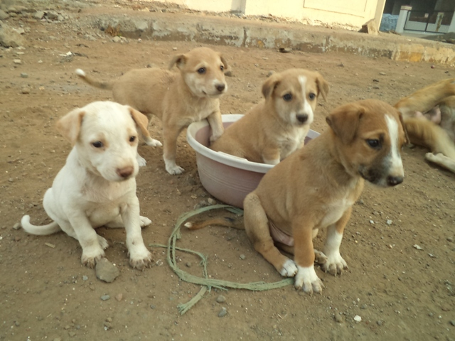 How To Adopt A Street Dog