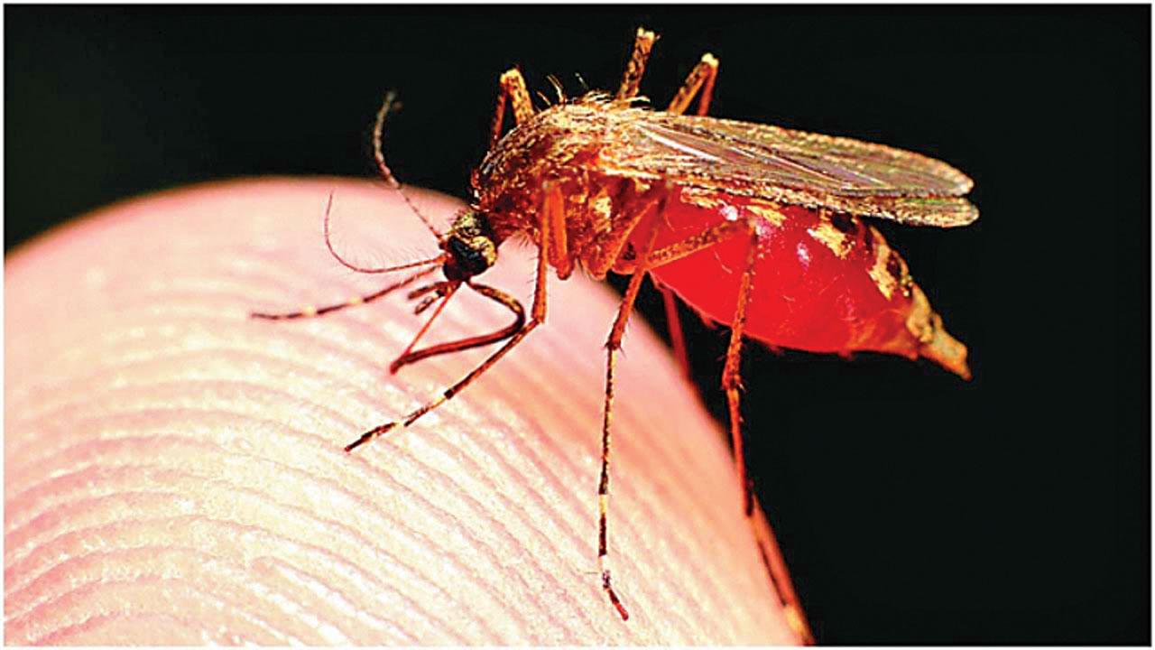 Ahmedabad reports 331 waterborne cases in 2 weeks