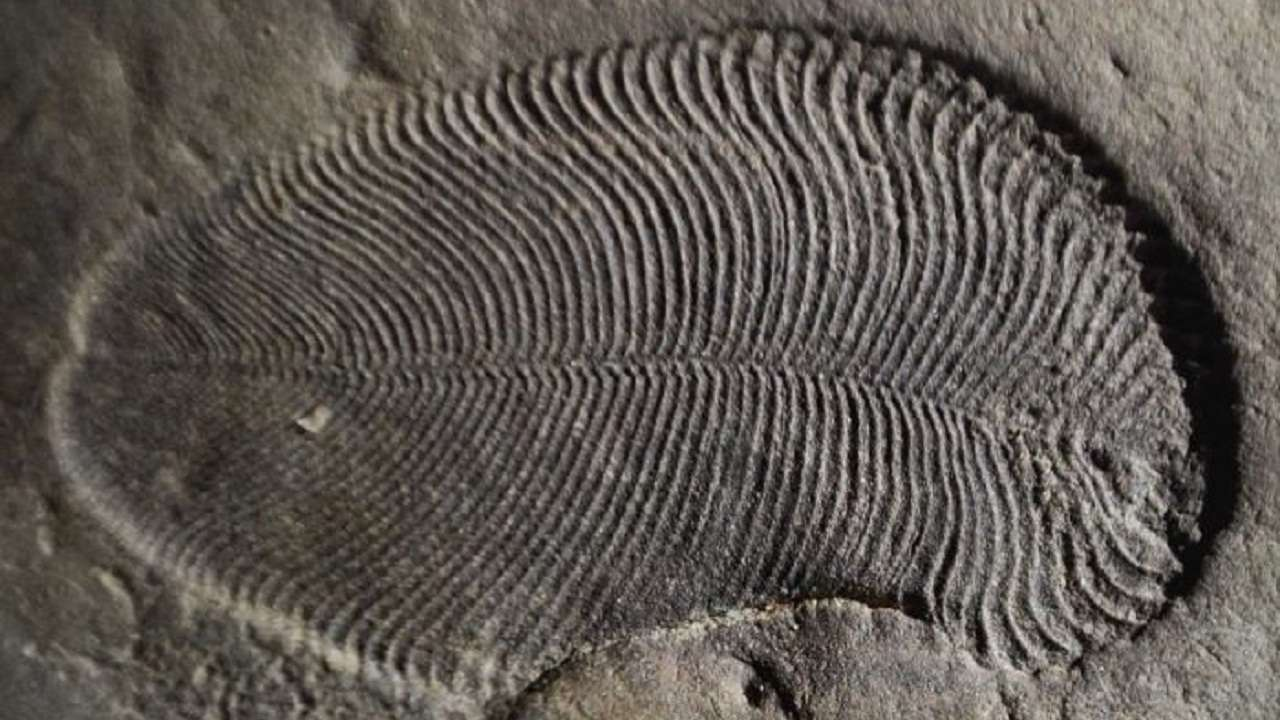 Scientists discover new 'biosignature' to track remains of ancient life