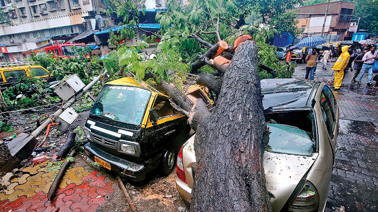 As rains pound Mumbai, tree falls keep up pace too
