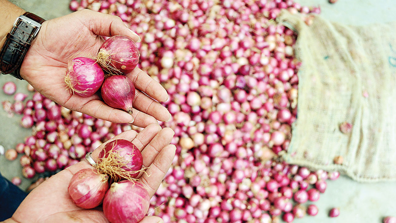 Maharashtra: Rainfall makes onion prices rise to Rs 50/kg