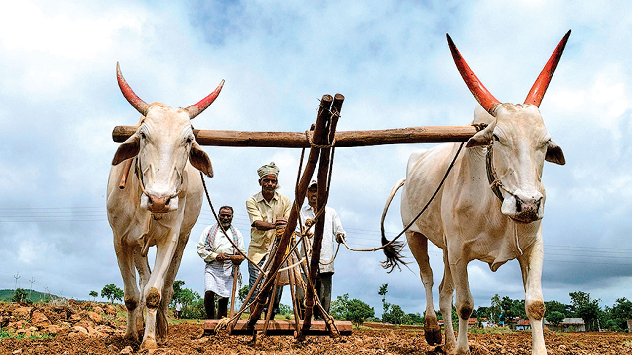 Gujarat: Recent rains may revive agriculture