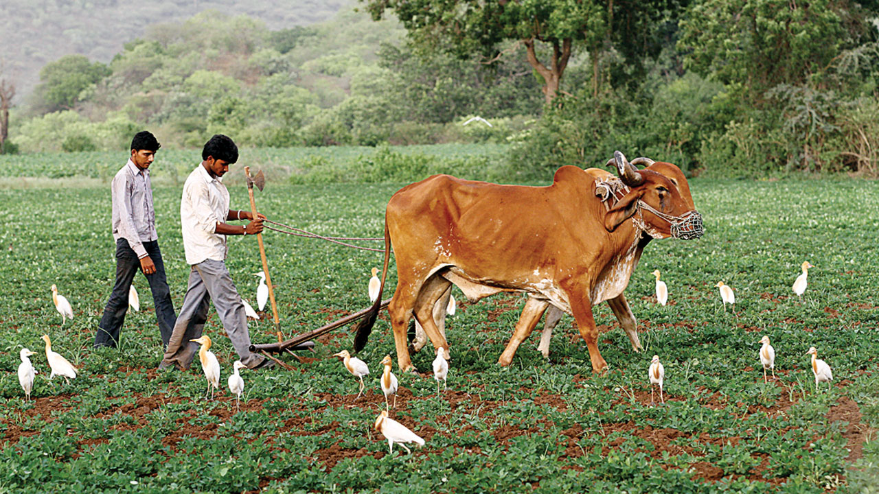 Extend crop damage claim date: Ex-min Jayanti Kavadiya to Gujarat govt