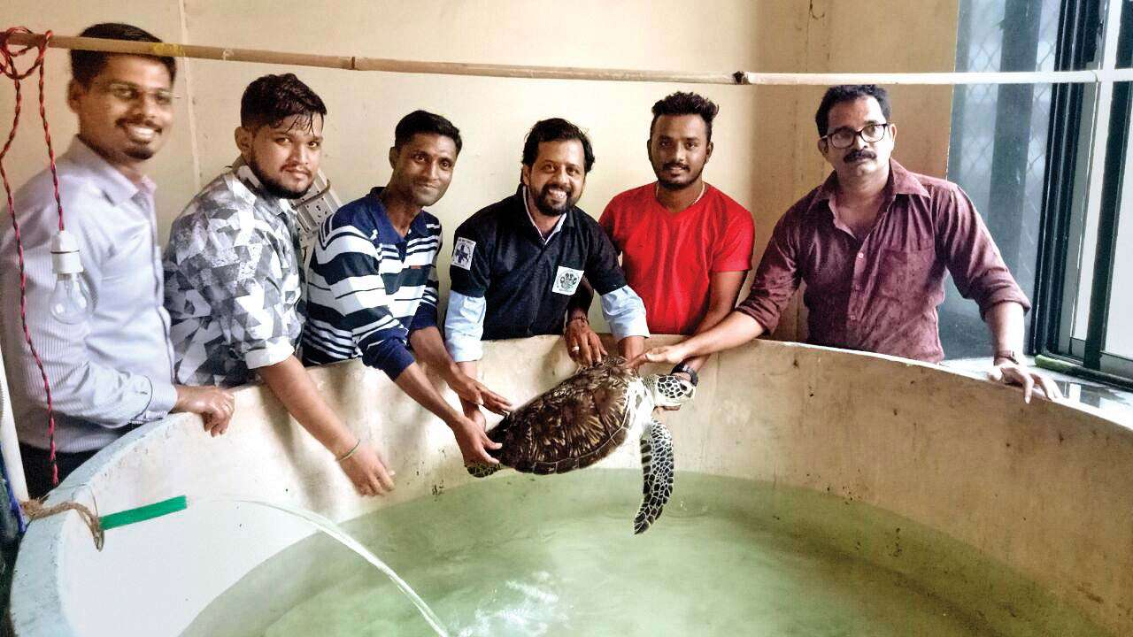 Mumbai's Taraporewala aquarium's turtle 'back' in a good health