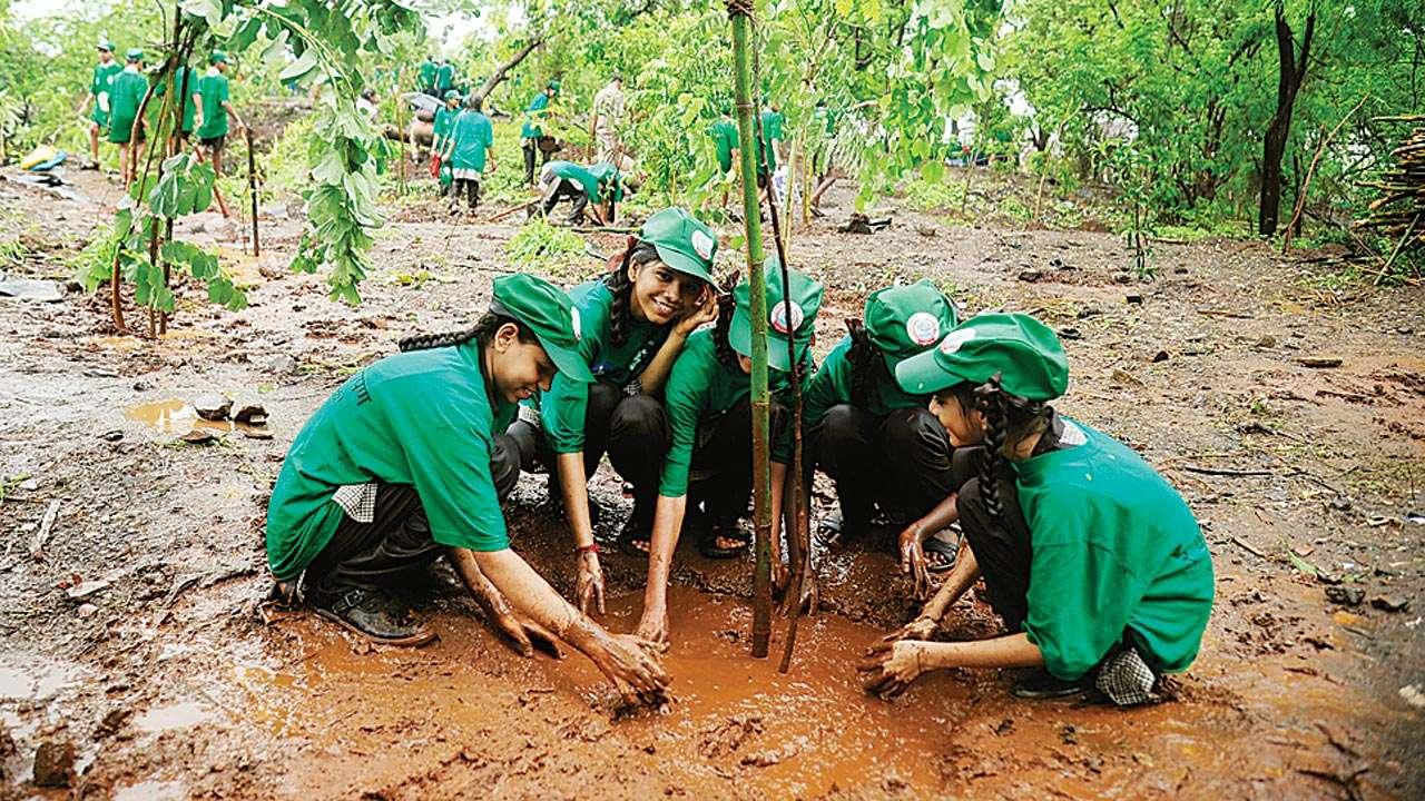 Tree plantation Drive_2018