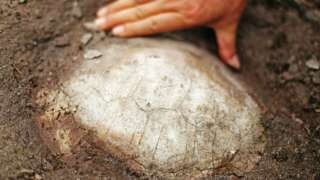 Jurassic-era turtle fossil discovered in China: Report